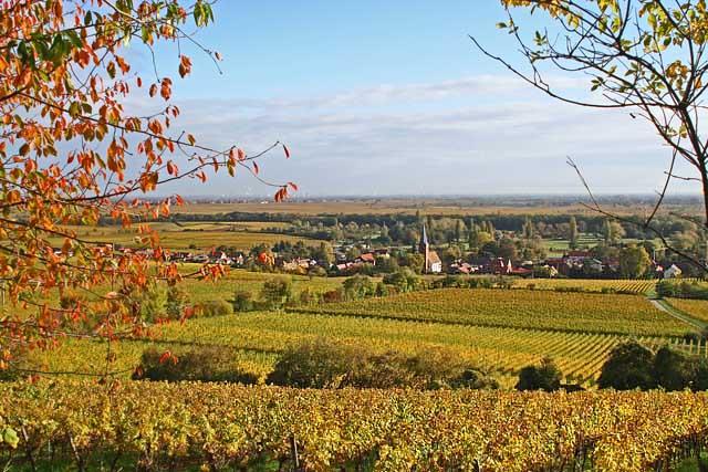 是德国第二大葡萄酒产区,种植面积达23000多公顷, 仅次于莱茵黑森.