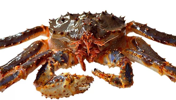 鲜活帝王蟹 4斤/只 深海帝王蟹 海鲜 进口海鲜 螃蟹 蟹 阿拉斯加【大